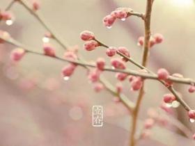 今日立春│戒骄戒躁 莫负韶光
