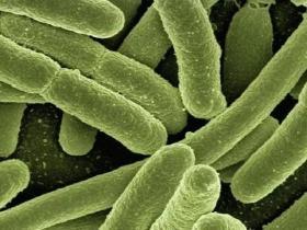 肿瘤靶向的细菌疗法:免疫治疗的另一种选择