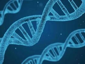 肺腺癌Del19-EGFR突变肽与个体化免疫治疗潜力